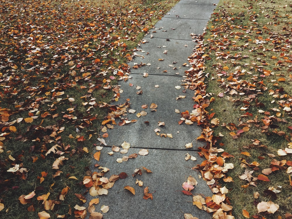 concrete pathway surrounded by brown dried leaf