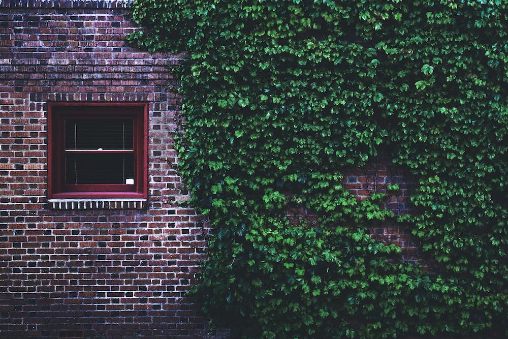 green wall grass beside the windowpane