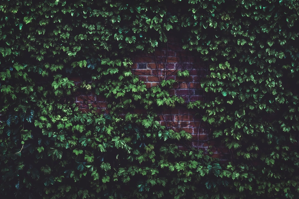 green leafed plant in brick wall