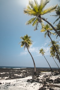 palm trees near the seashore during daytime