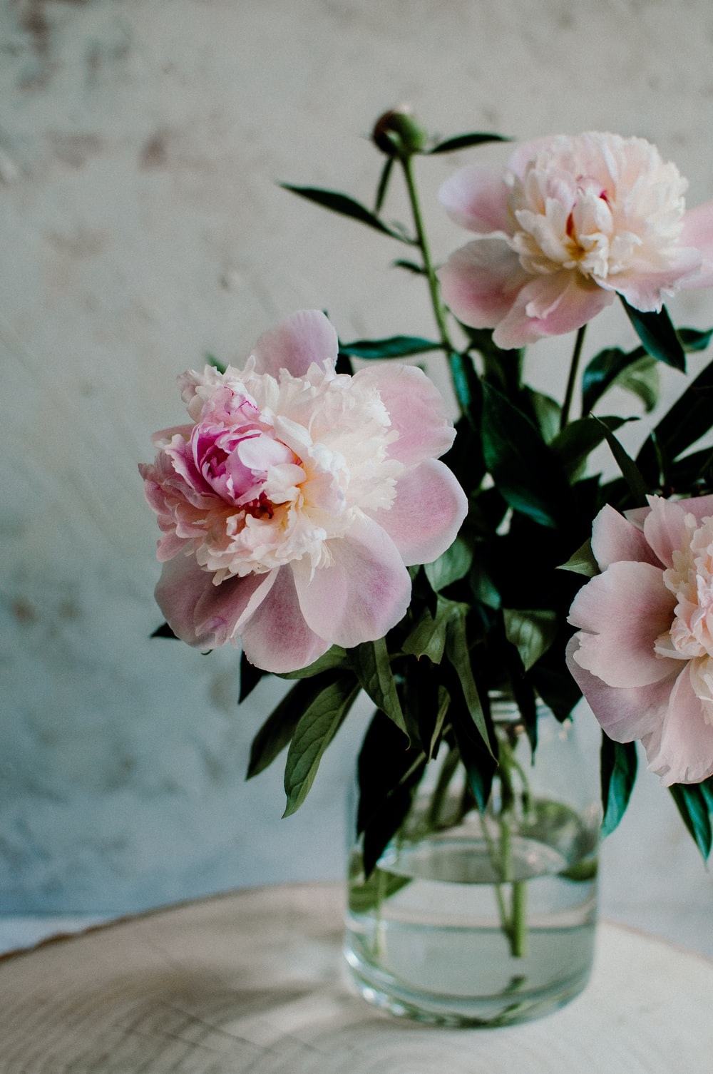 pink petaled flowers in clear glass vase