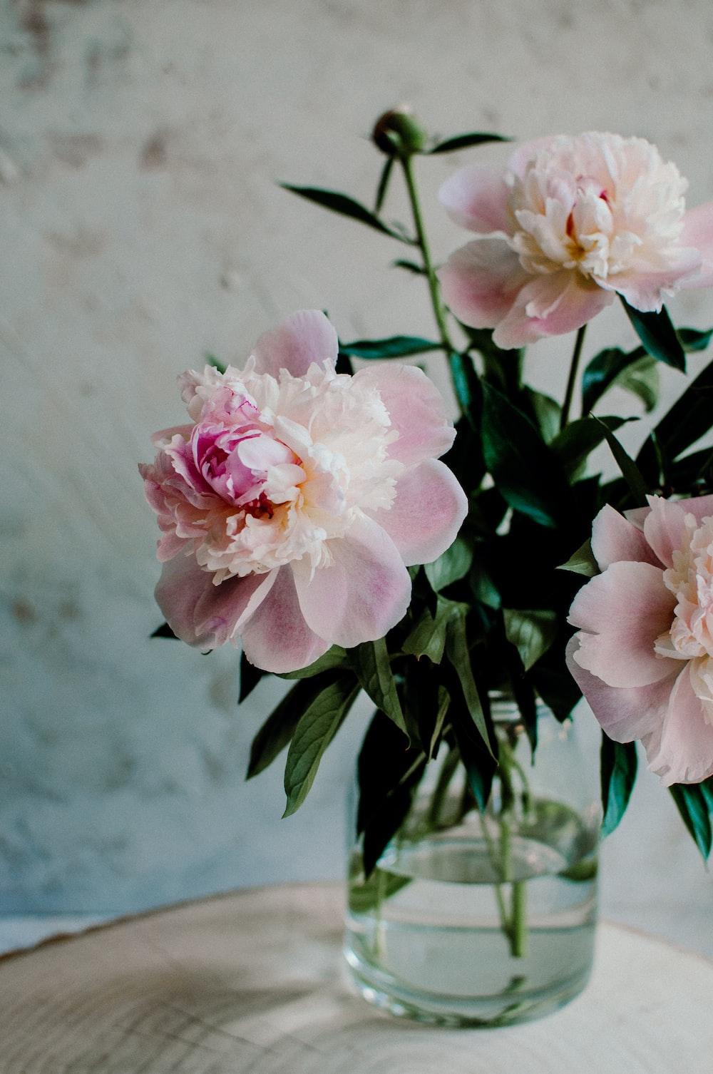 Vintage Flowers Pictures Download Free Images On Unsplash