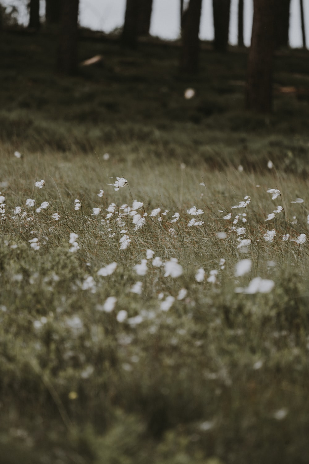 Blowing grass pictures download free images on unsplash white flowers and green grass mightylinksfo