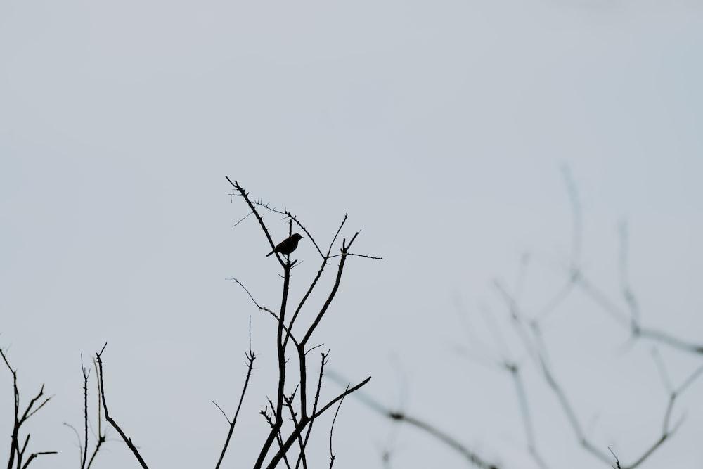 bird on brown plant
