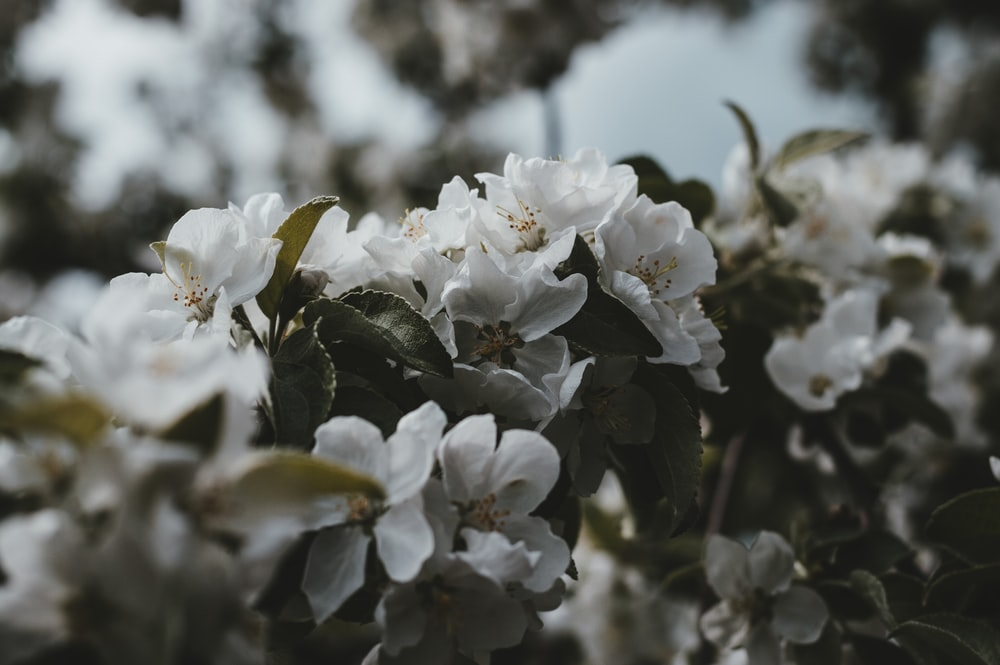 Nature flower white leaves green naturaleza flowers flores shallow focus photography of white flowers mightylinksfo