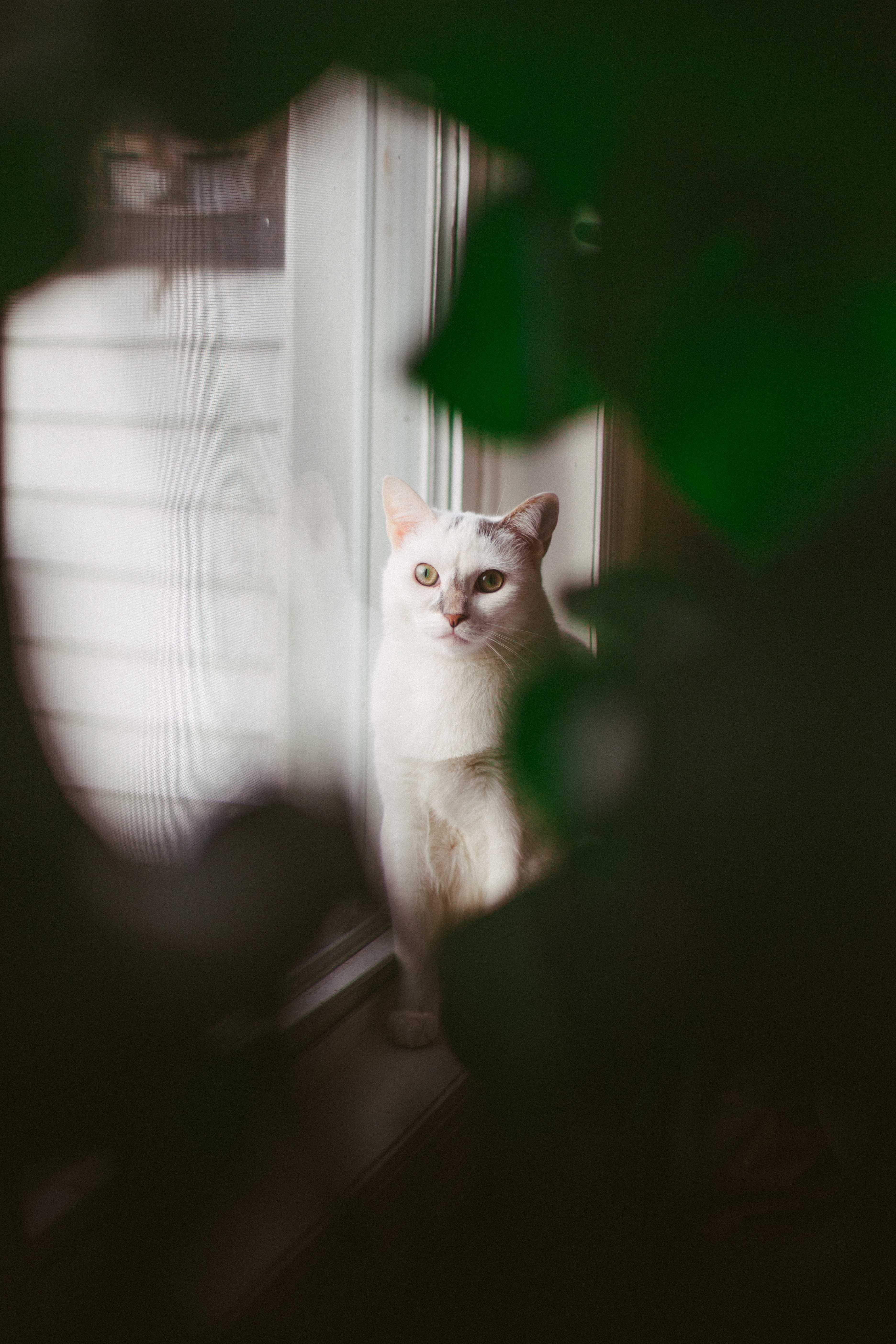 white cat sitting on window
