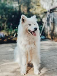 𝘞𝘪𝘭𝘭 𝘺𝘰𝘶 𝘣𝘦 𝘮𝘺 𝘷𝘢𝘭𝘦𝘯𝘵𝘪𝘯𝘦 dog stories