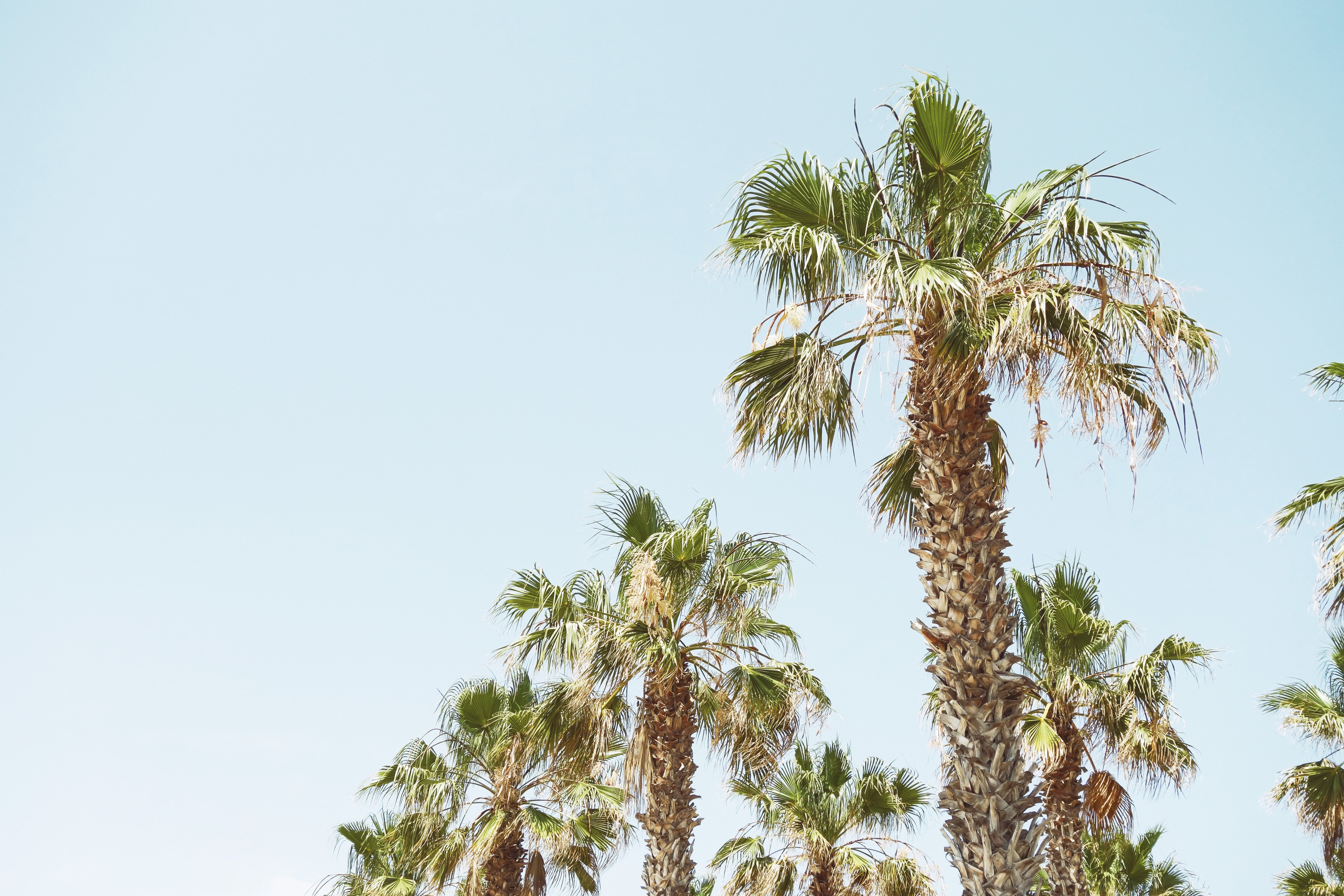palm tree under clear sky during daytime