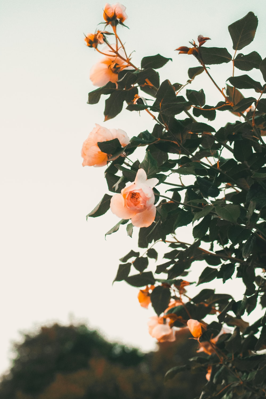 orange petaled flowers during daytime