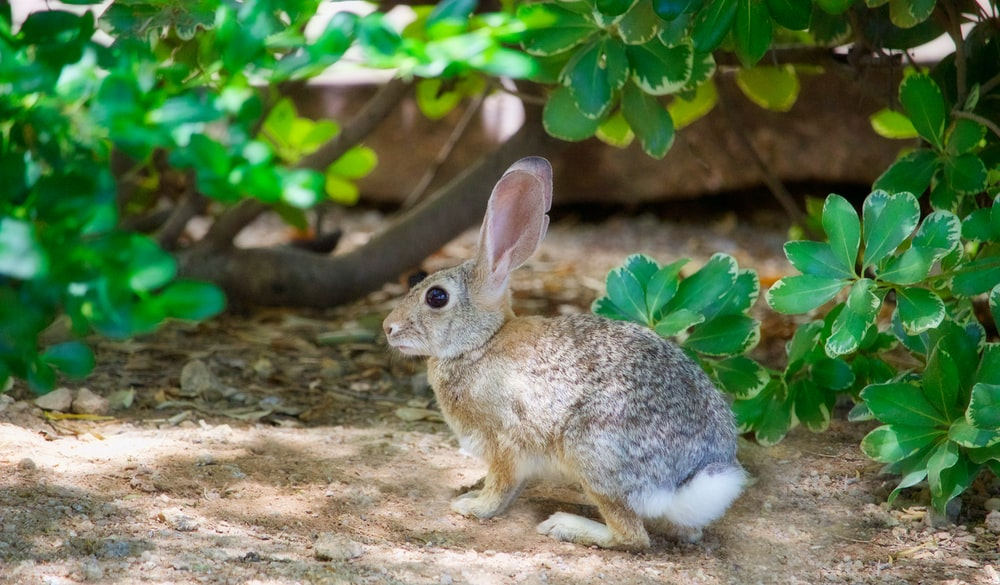 brown and grey rabbit beside green leaf plant