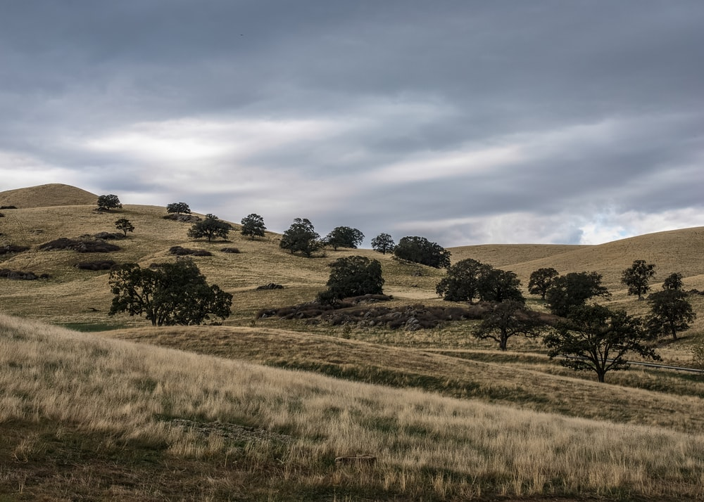 landscape photography of grass field with trees