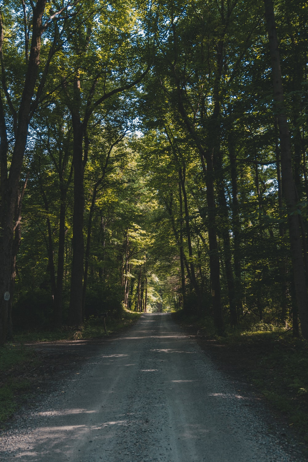photo of road surrounded by trees during daytyime
