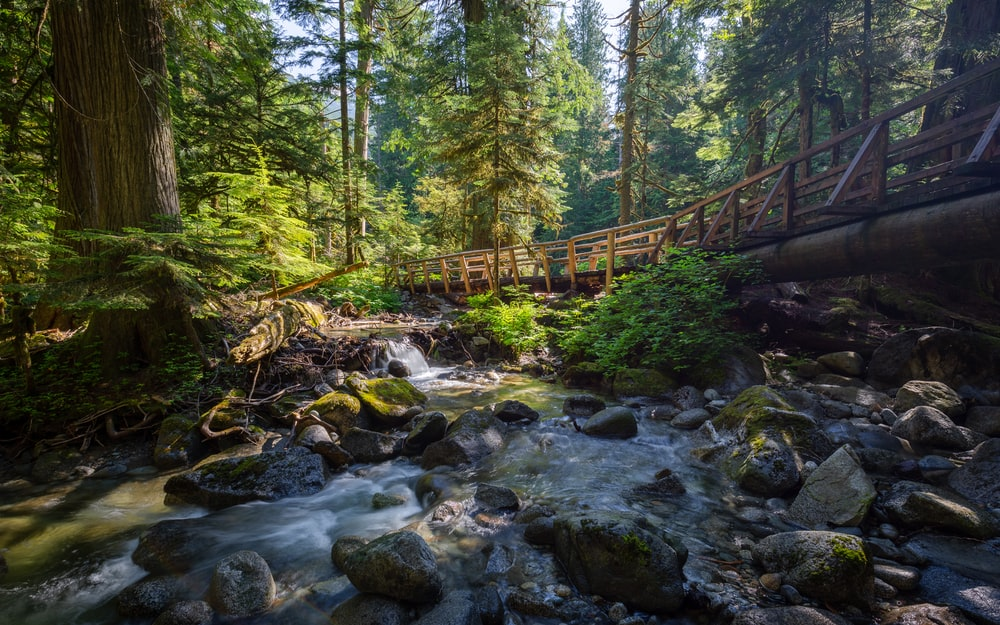 brown wooden bridge over river surrounded by trees