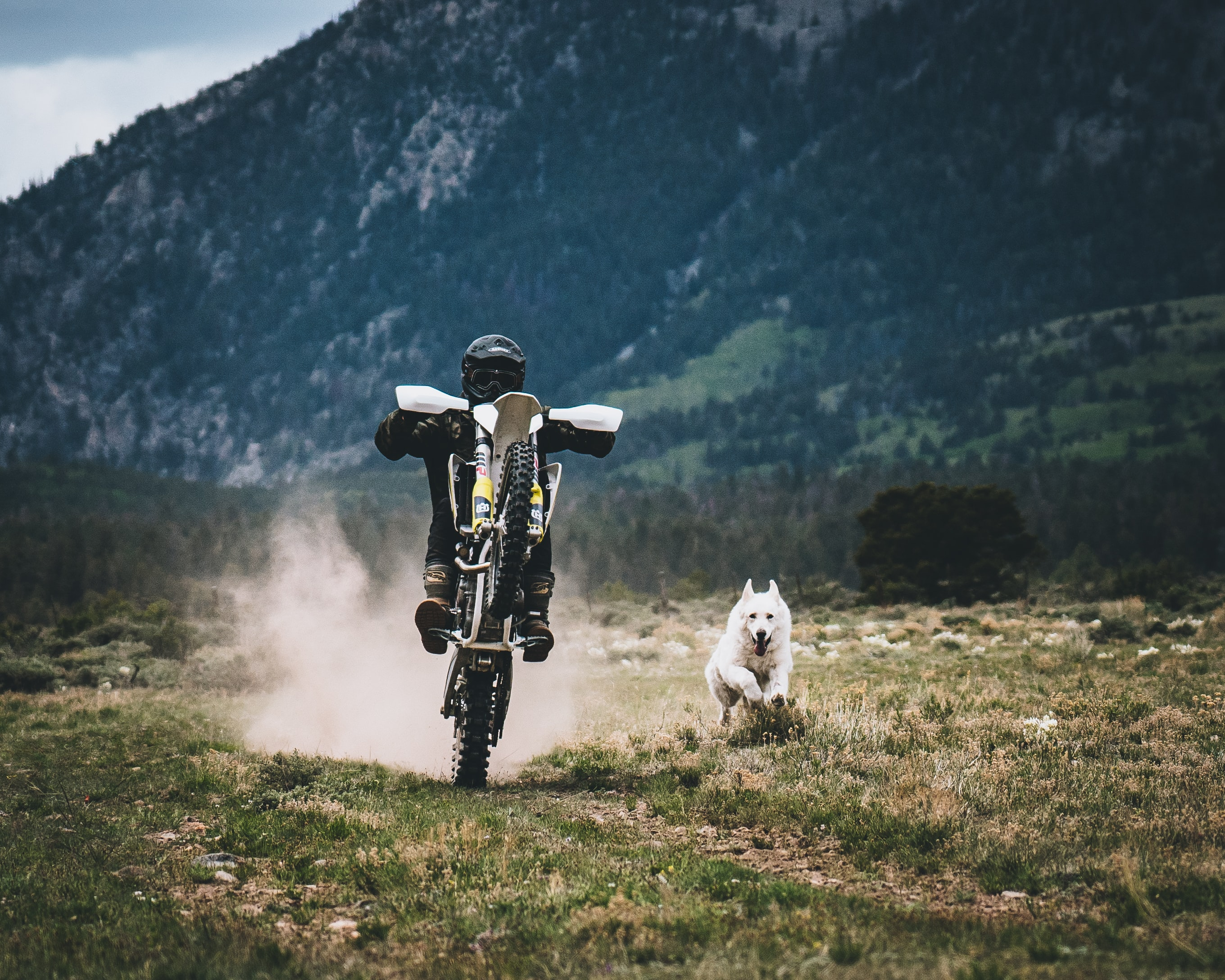 person playing motorcycle on green grass field with white dog