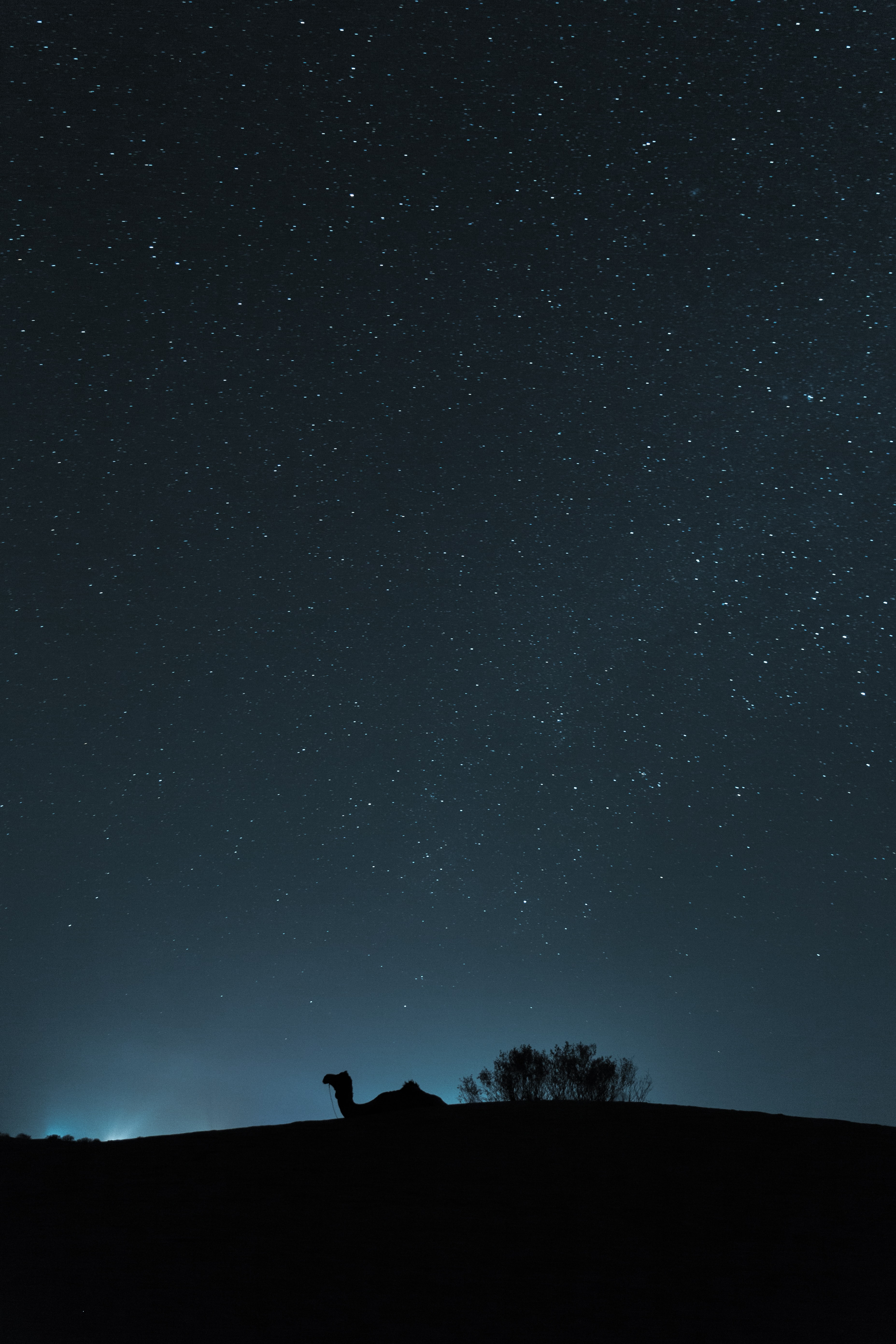 silhouette of camel during nighttime