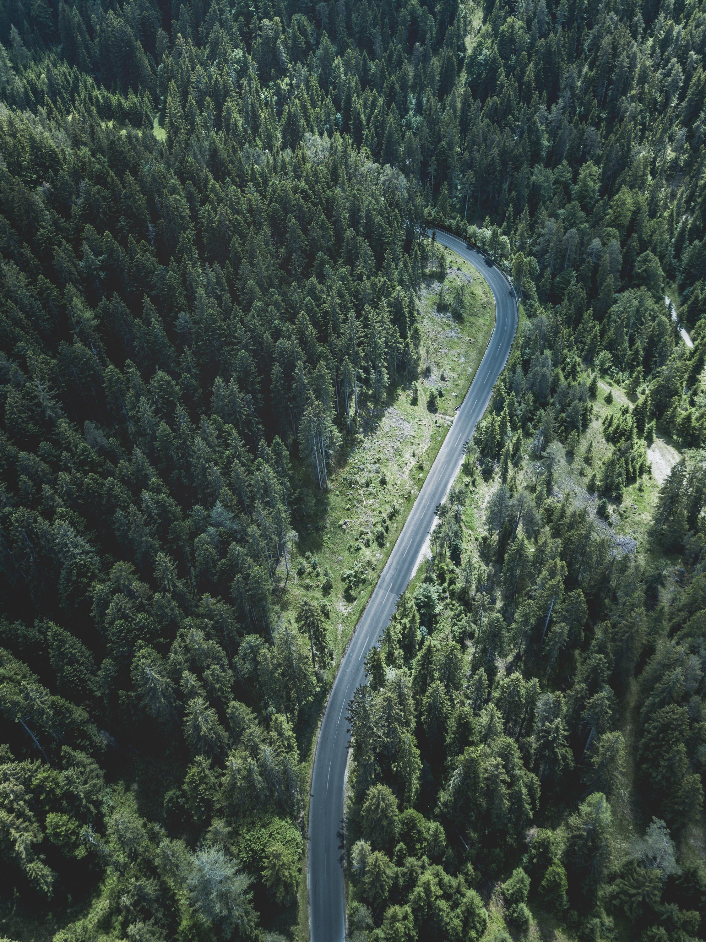 road surrounded by trees