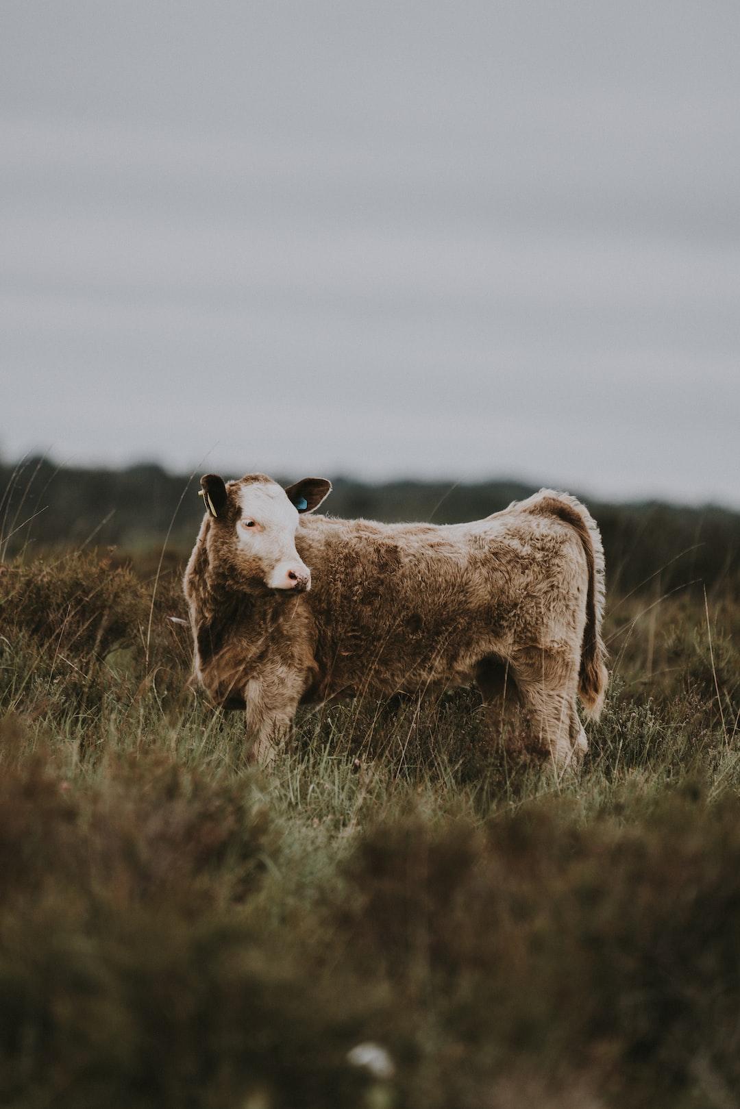 Beef Update