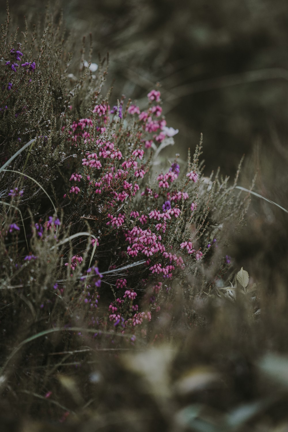 selective focus photo of pink and purple petaled flowers at daytime
