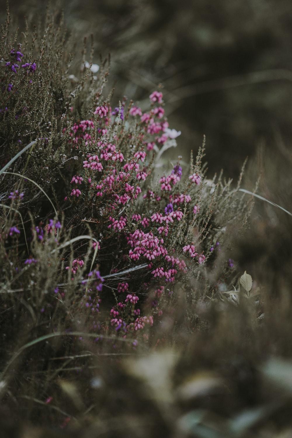 Pink Bush Pictures Download Free Images On Unsplash