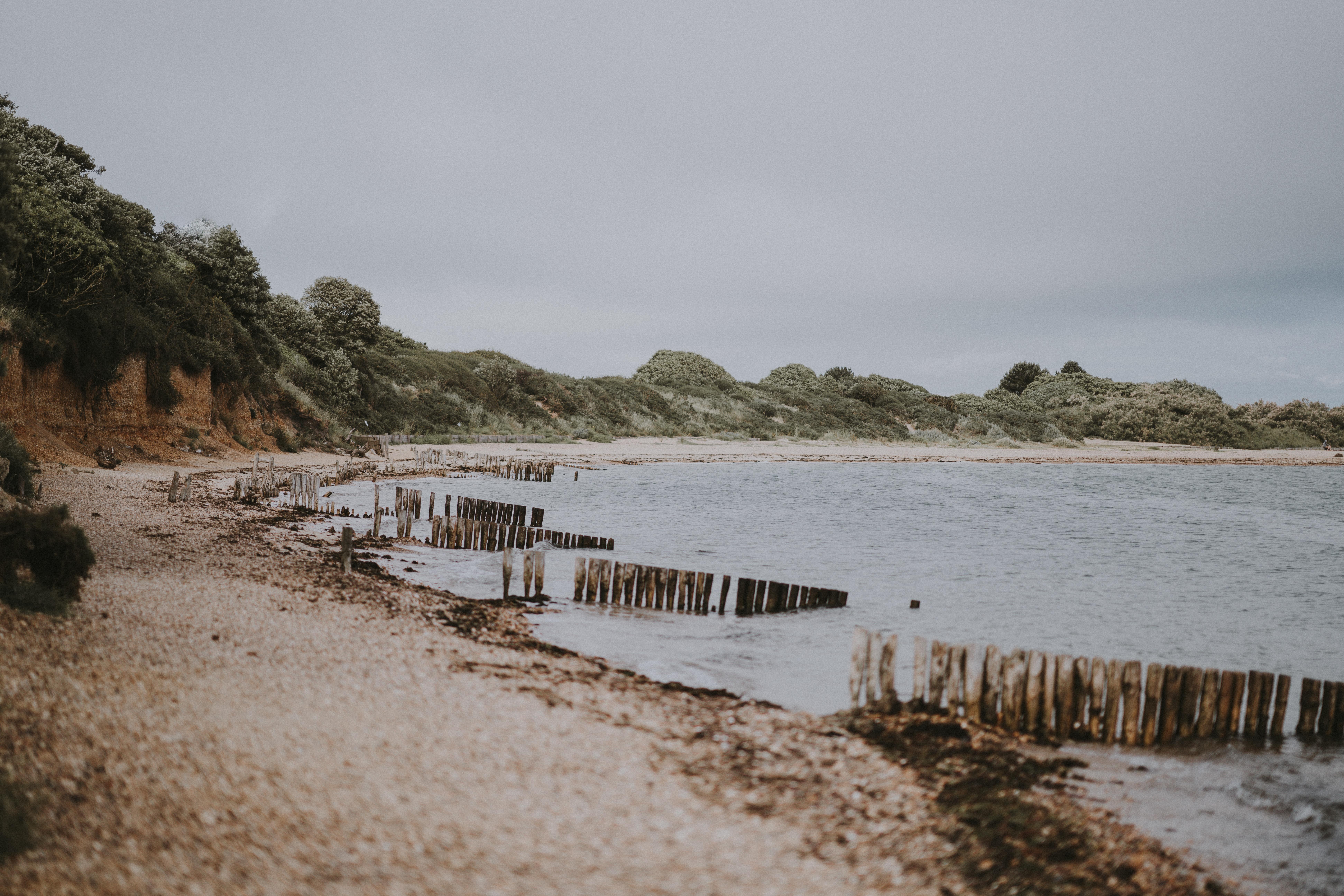 brown fence on seashore near trees
