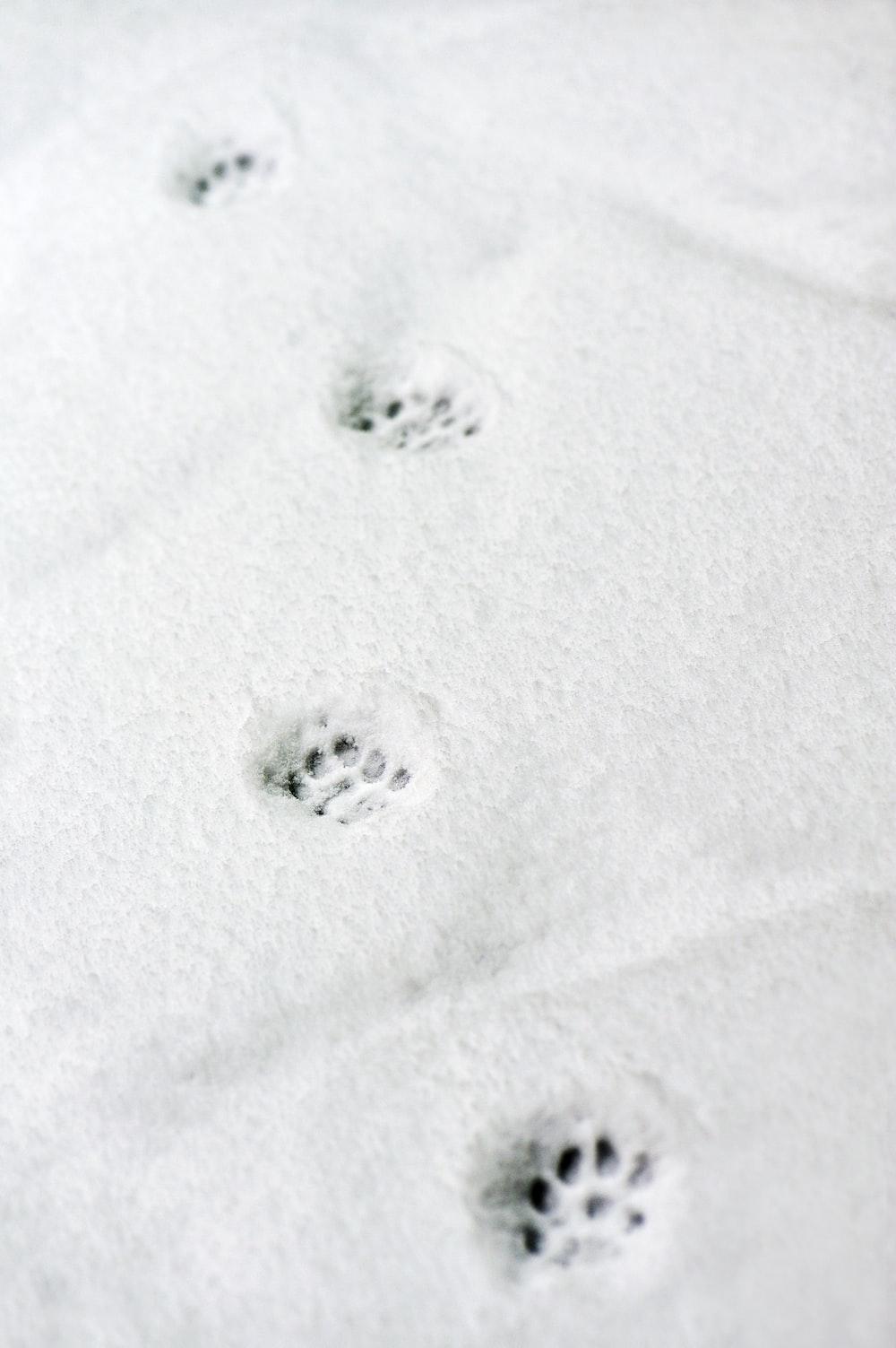 snow paw prints
