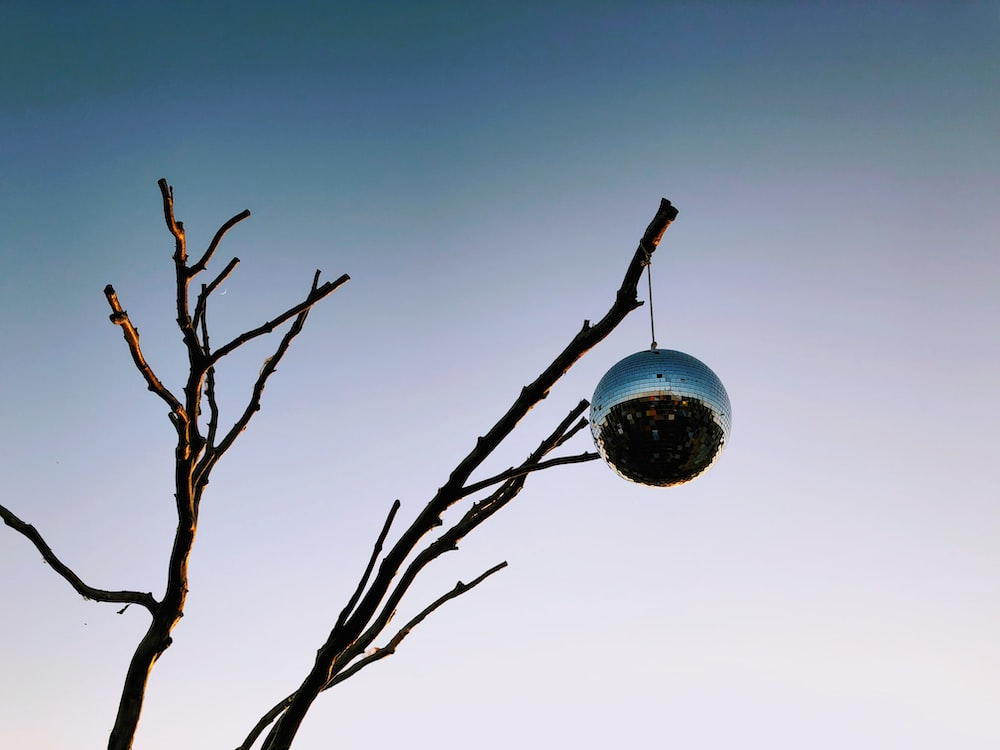 silver mirror ball hung on withered tree