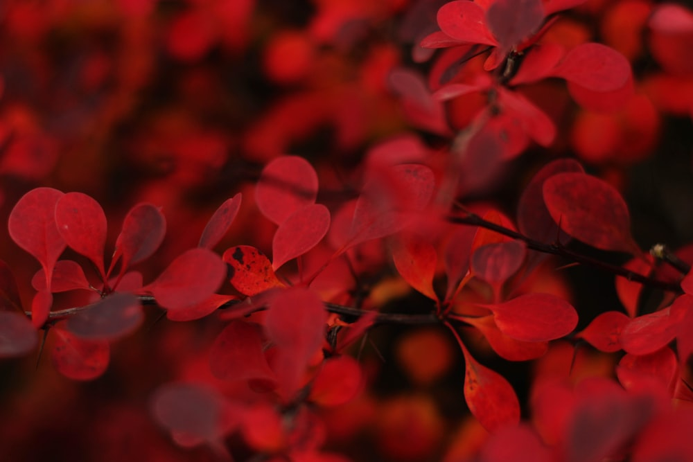 macro shot of red flowers
