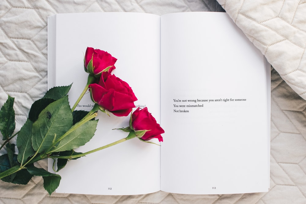 three red rose flowers on white open book