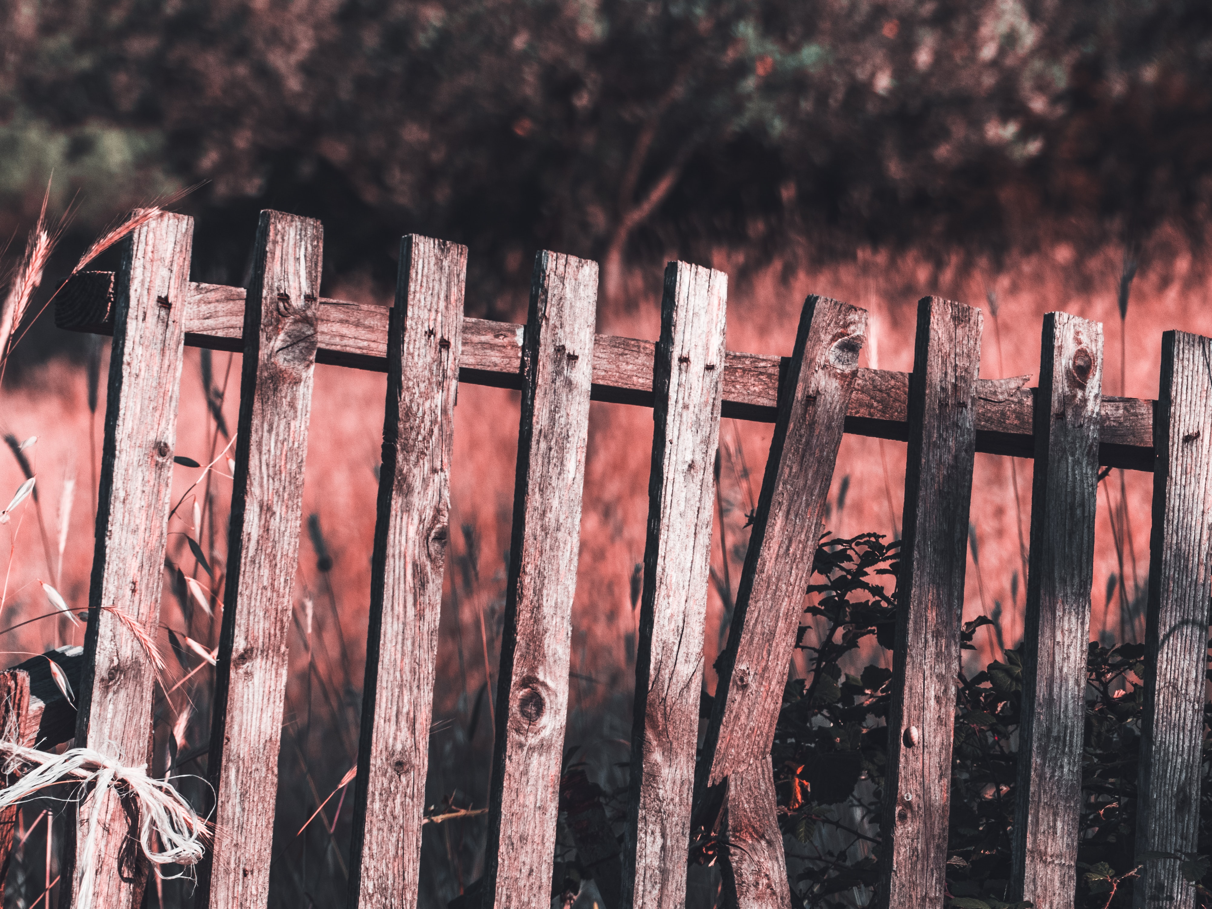 brown wooden fence near tall grass
