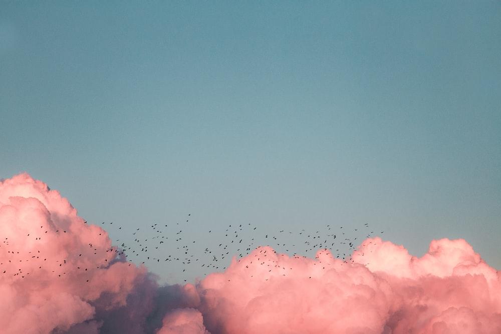 birds flying near clouds