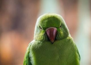 shallow photography of green bird