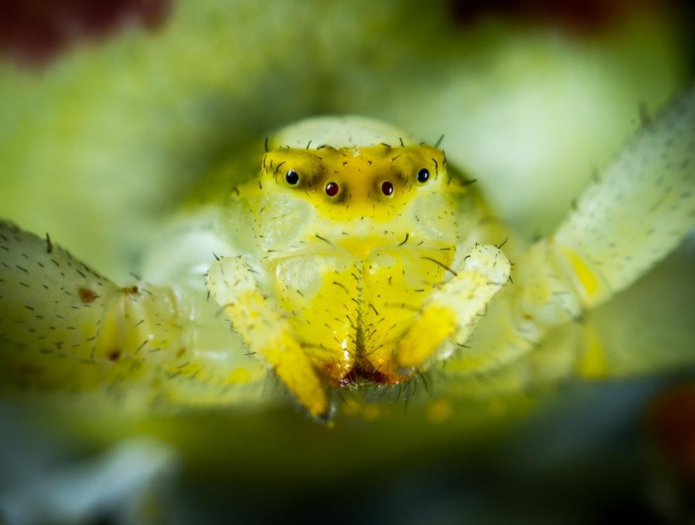 macro photo of green spider