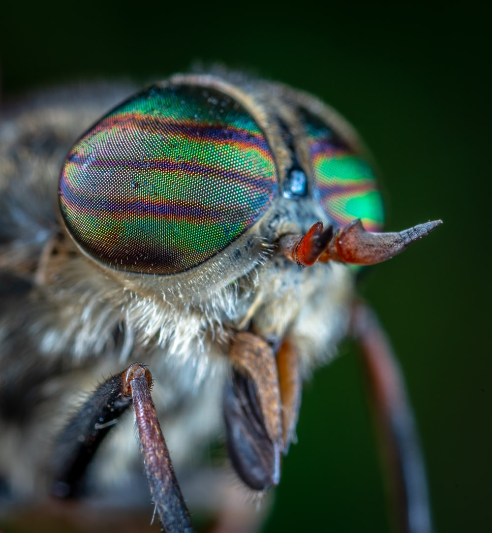 micro photography of insect