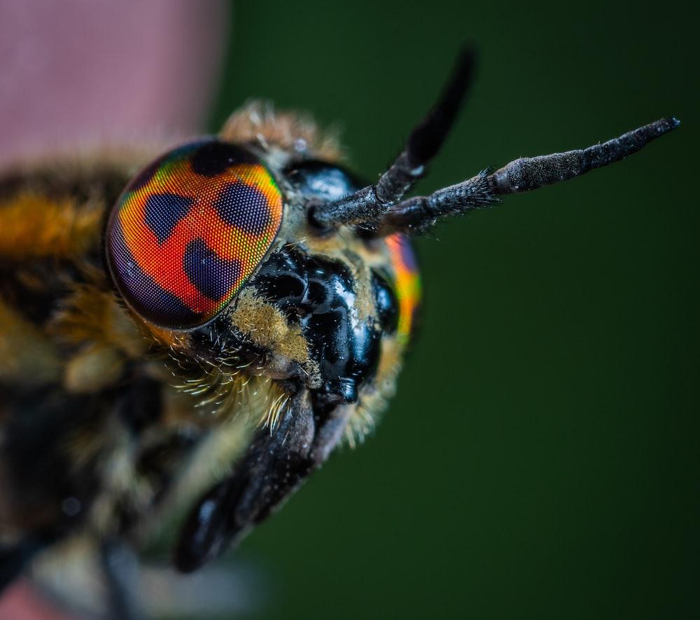macro photo of black and orange bug