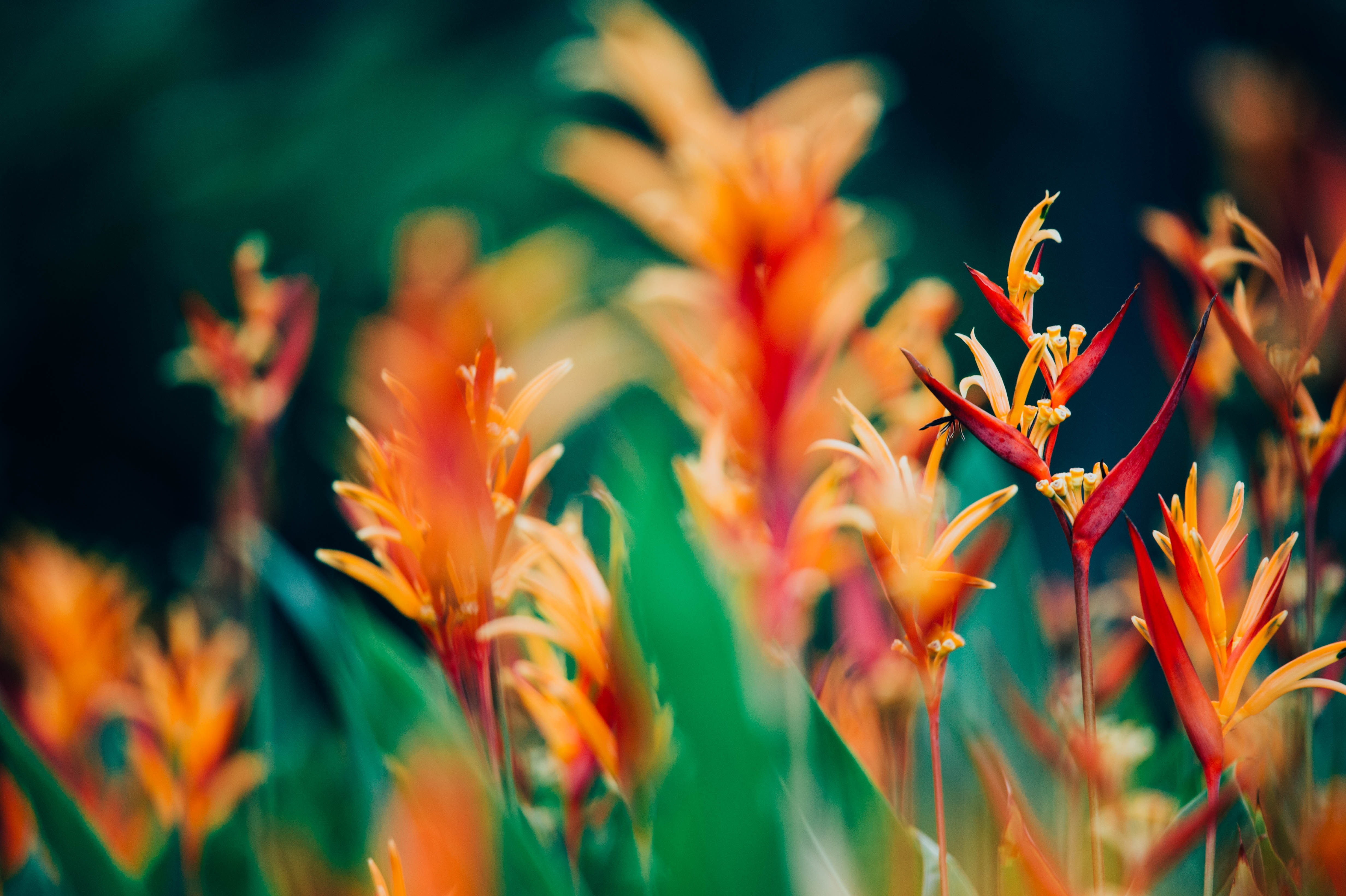 orange and red petaled flowers