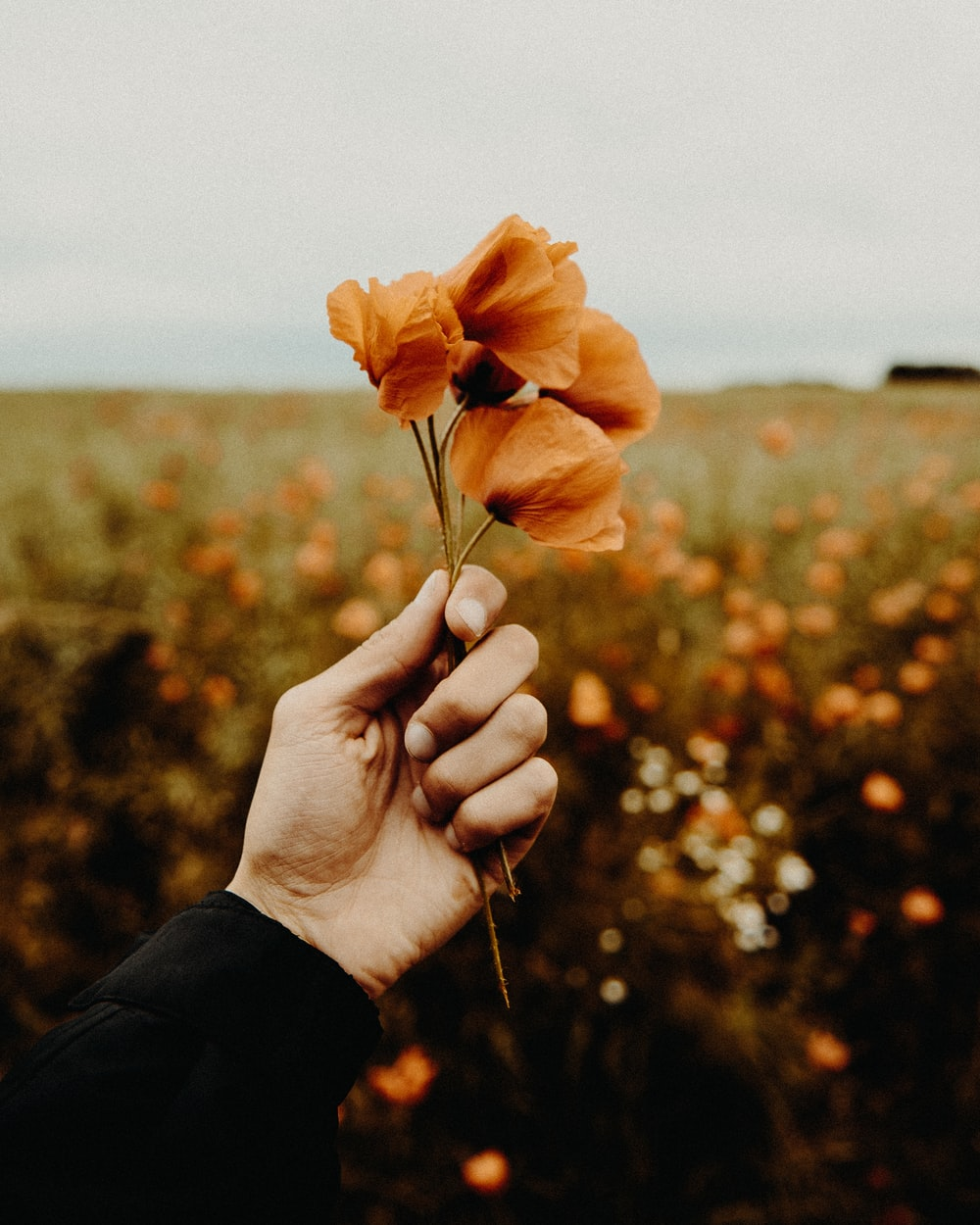 person holding brown petaled flowers
