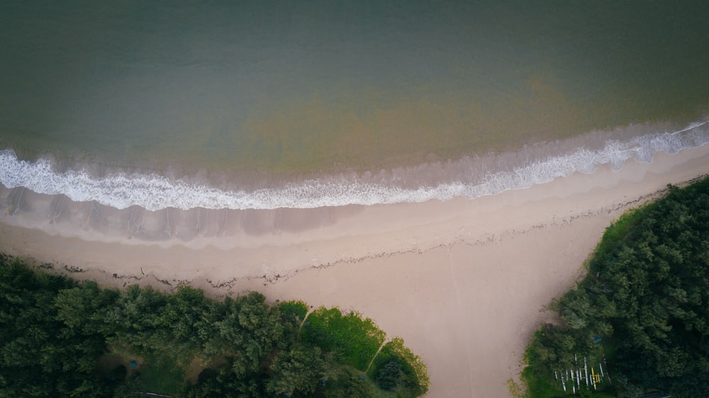 aerial view of beach near green leafed tree and ocean water during daytime