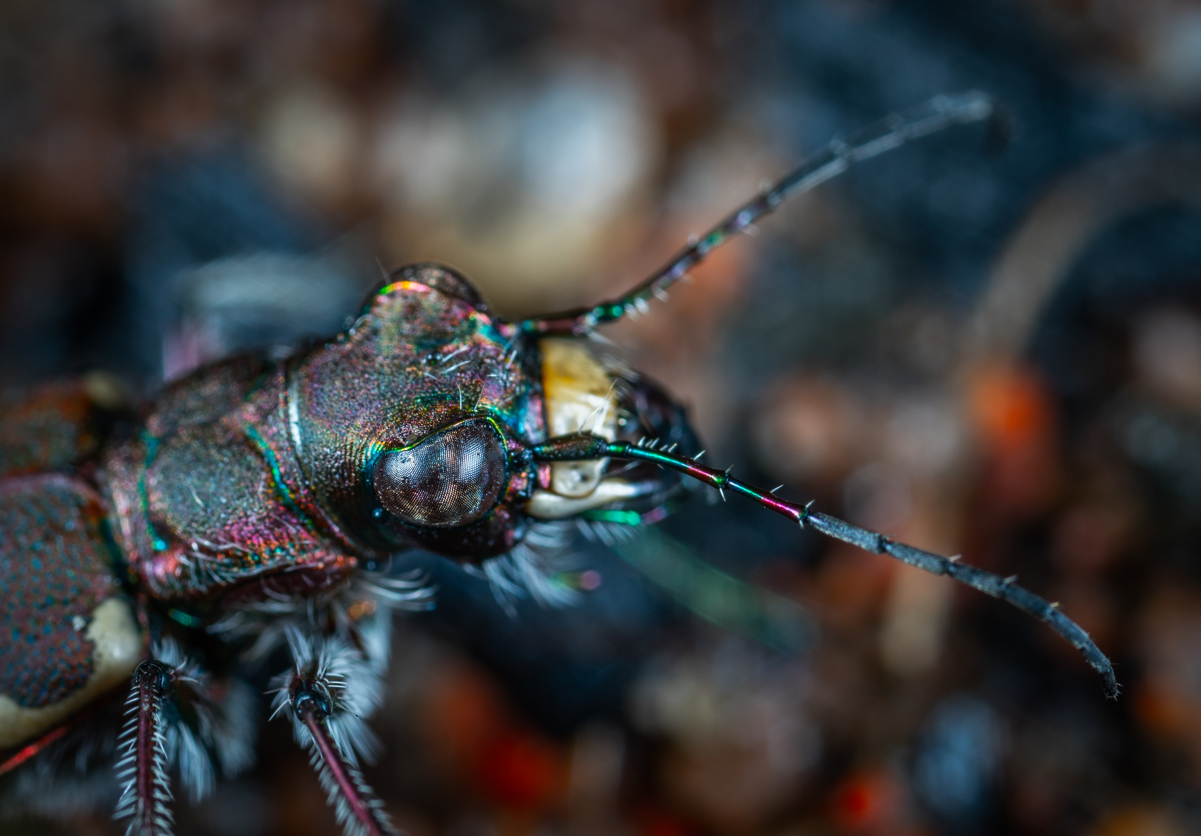 macro photography of black insect