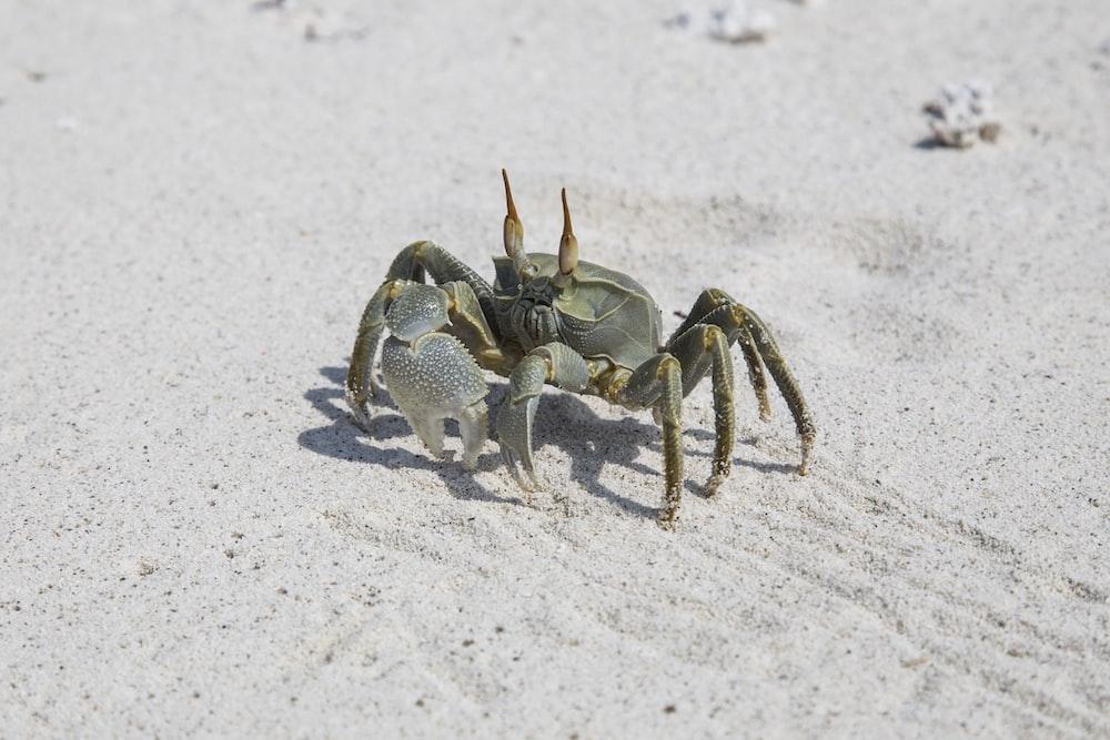gray crab on gray sand