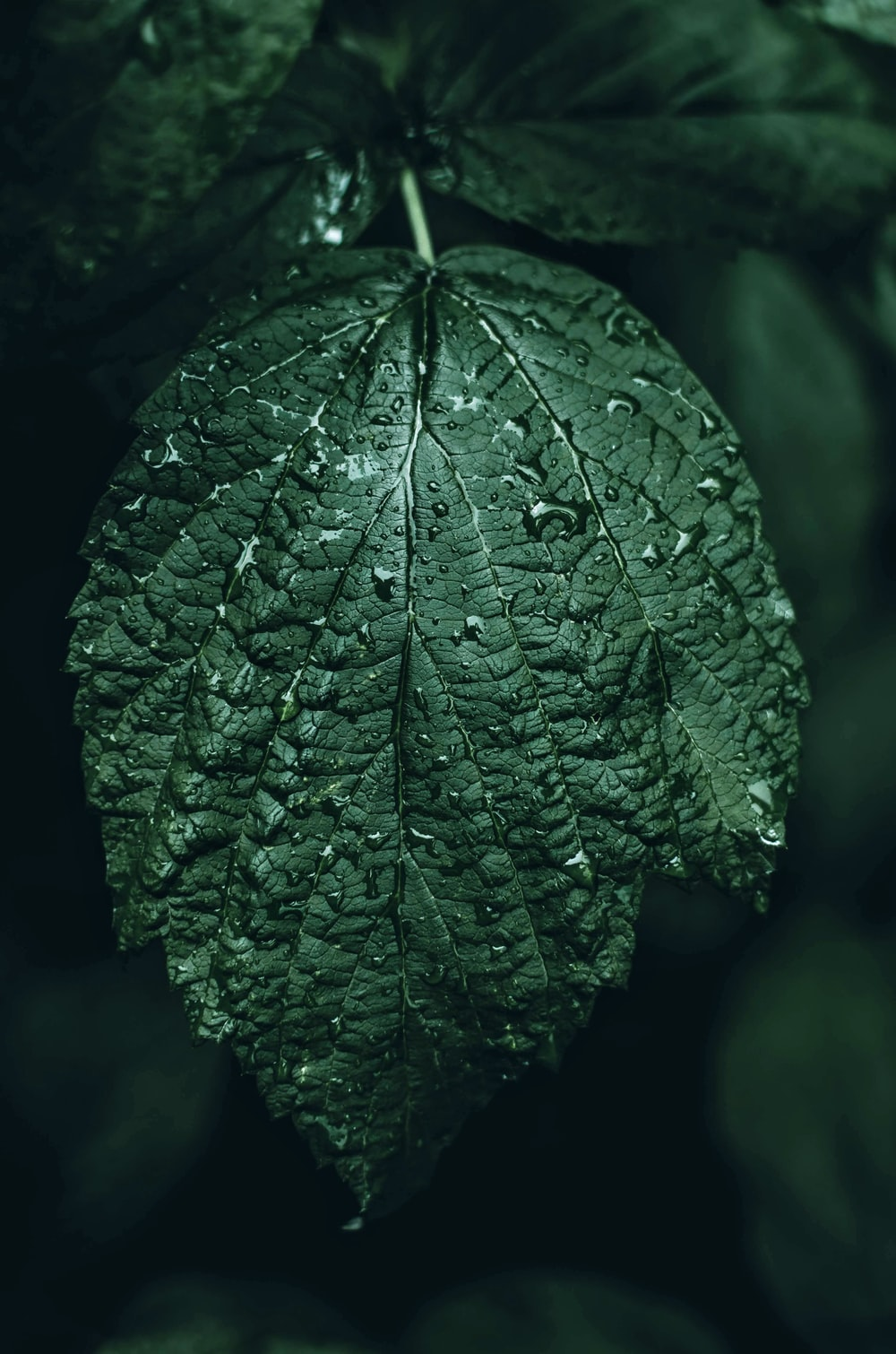 selective-focus photography ovate leaf