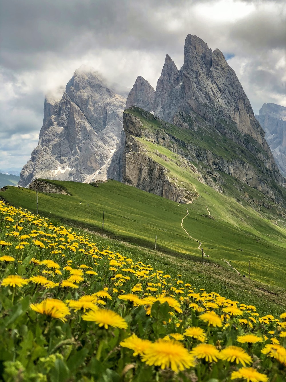 sunflower flowers across green hills under white clouds
