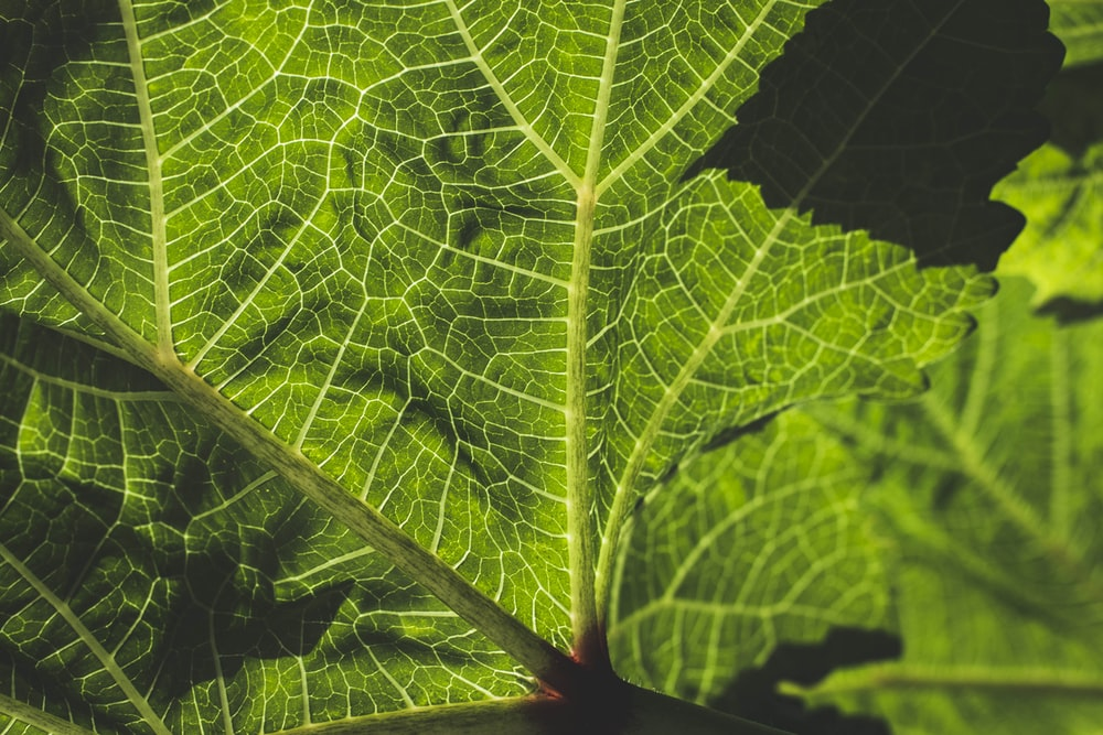 closed-up photography of green leaf