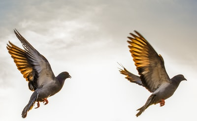 two flying brown birds on mid-air painting
