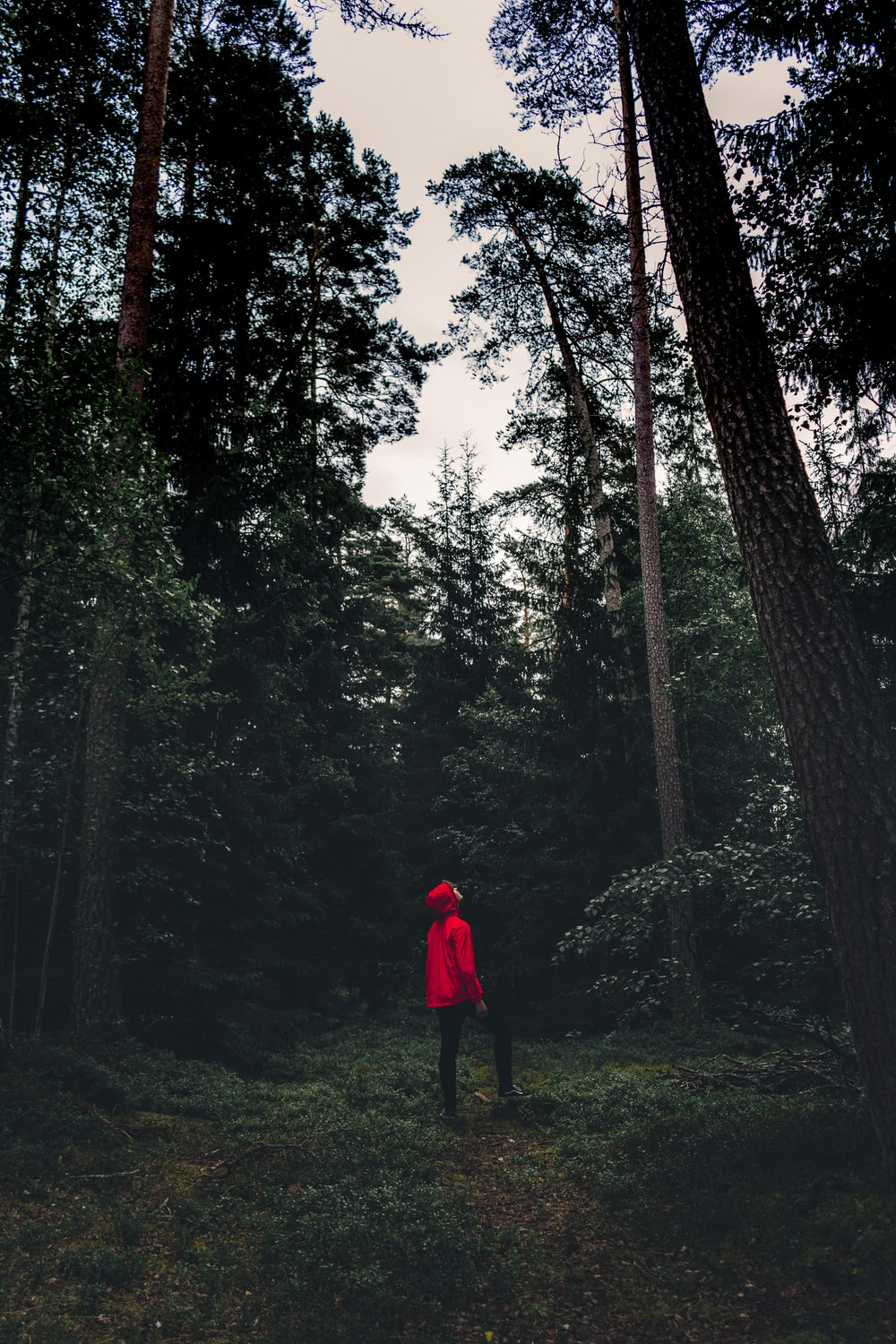man in red hoodie standing on tree area while looking up