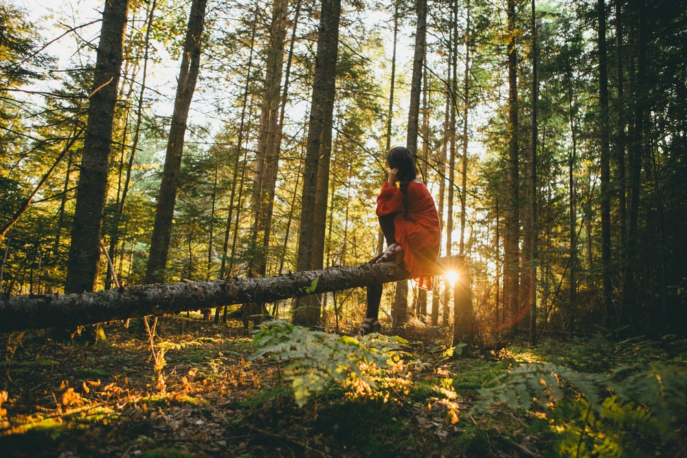 woman sitting on gray tree log on forest under trees during sunrise
