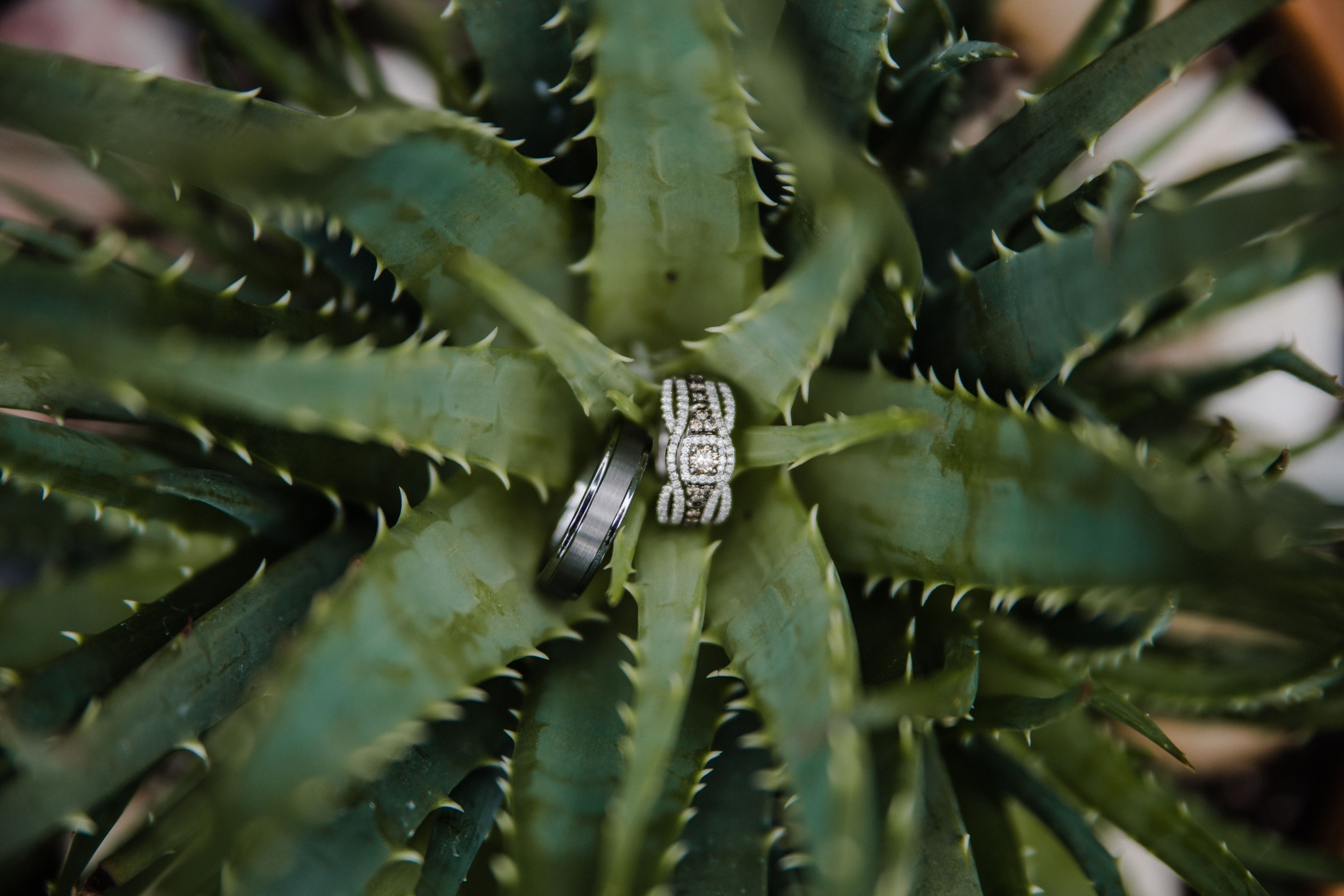 silver-colored and tungsten carbide ring on green leaf plant
