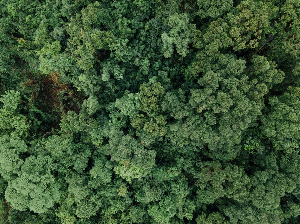bird's-eye view of forest