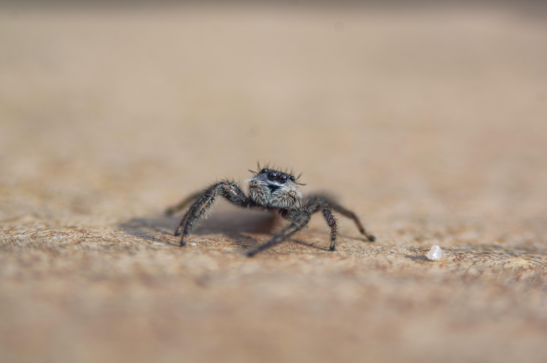 focus photo of spider