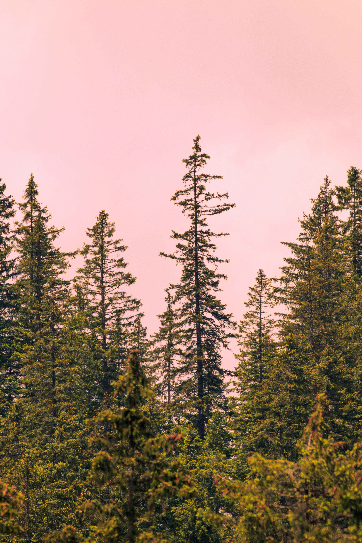 dense fog in the woods photo by kash goudarzi   kash  on