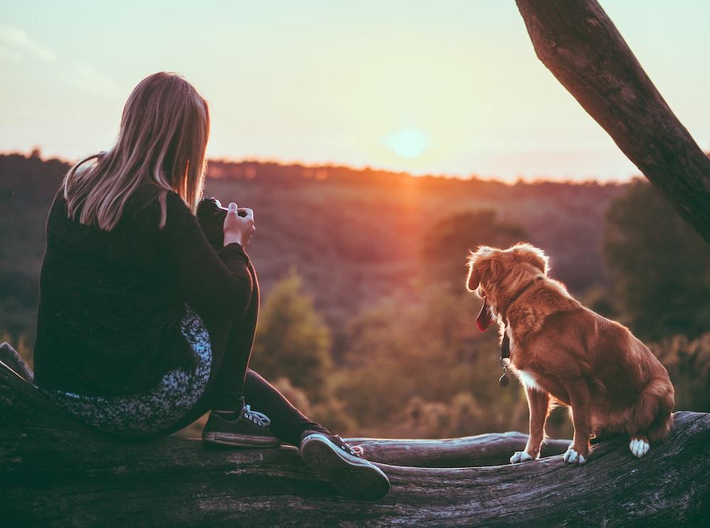 茶色の犬の近くの女性